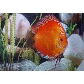 Marlboro Red 5 cm - Stendker